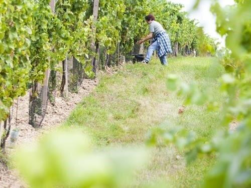 Vrbovecké vinobraní 2021