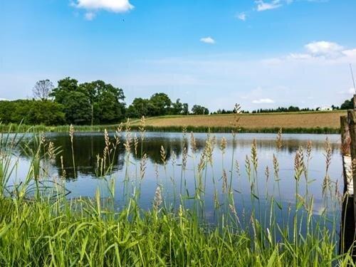 Výlov rybníka Žár