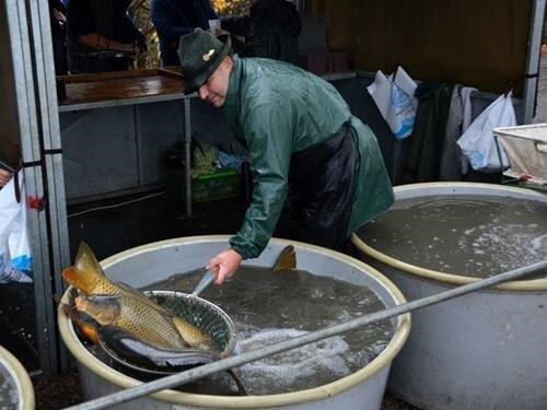 Výlov rybníka Bezdrev a rybářské slavnosti