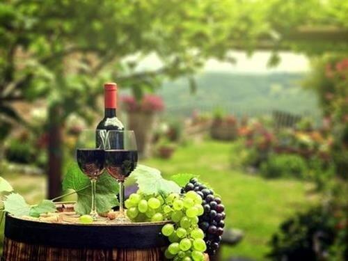 Den vína na kolonádě