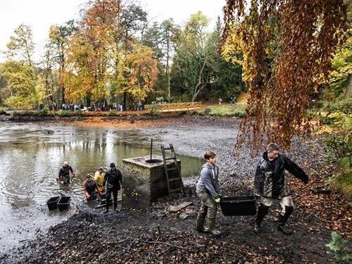 Výlov zámeckého rybníka v Jirkově