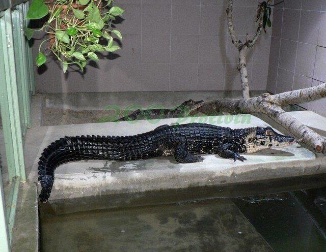 Krokodýlí ZOO v Protivíně