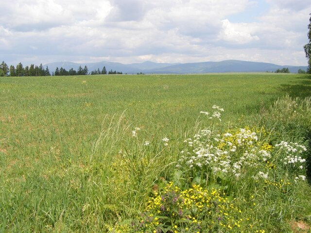 Nový Rokytník - výhledy na Krkonoše