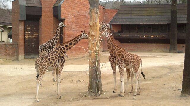 Zoologická a botanická zahrada Liberec