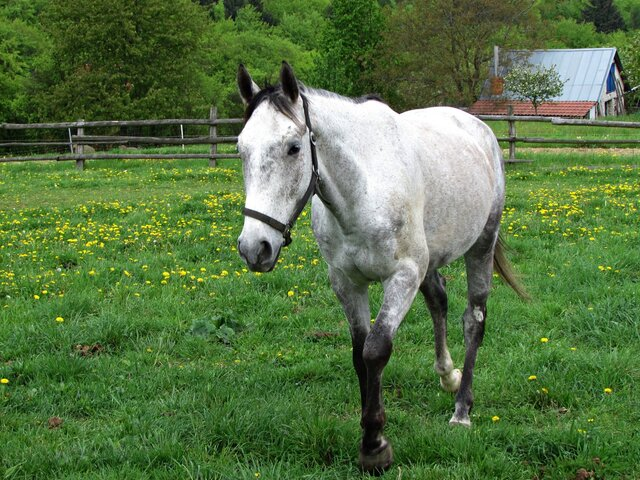 Žlutavský ranč a mini ZOO