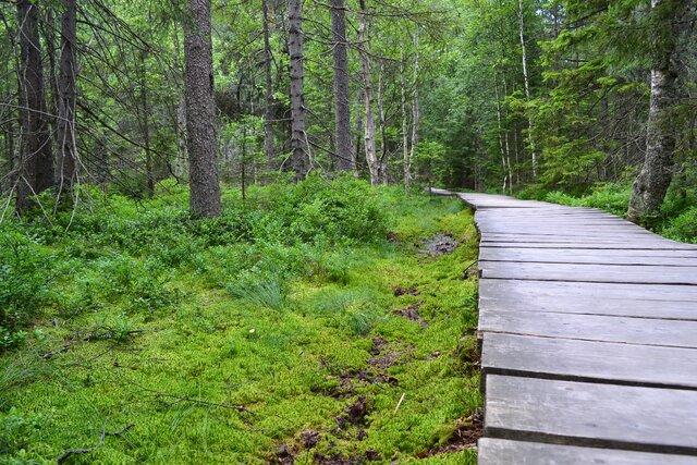 Přírodní rezervace a naučná stezka Rejvíz