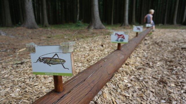 Stezka mladého lesníka