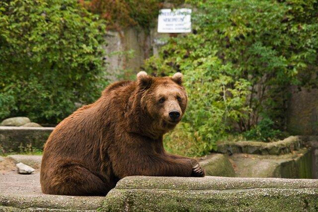 Zoo Varšava