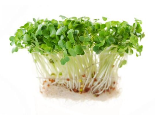 Ředkvička – semena na klíčky, 20 g