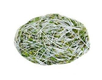 Hořčice bílá – semena na klíčky, 30 g