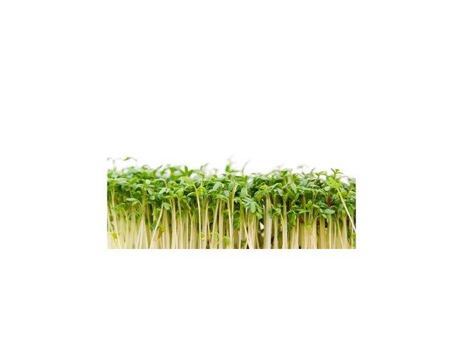 Řeřicha – semena na klíčky, 30 g