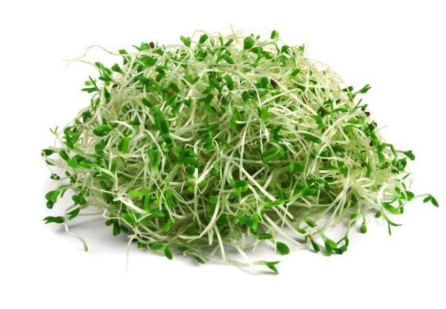 Vojtěška (lucerna setá) – semena na klíčky, 20 g