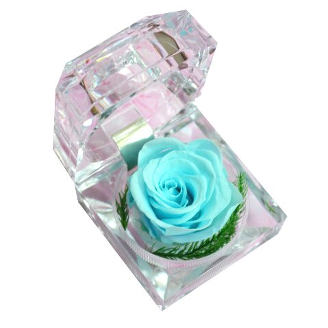 Nesmrtelná světle modrá růže