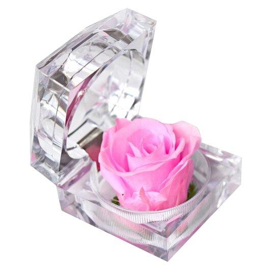 Nesmrtelná růžová růže