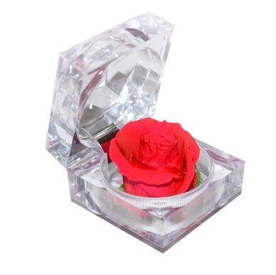 Nesmrtelná červená růže