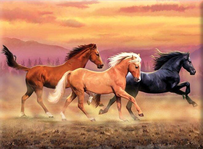 Malování podle čísel – Běžící koně