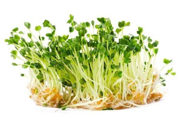 Rukola – semena na klíčky, 10 g