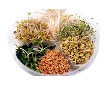Jemná směs – semena na klíčky, 20 g