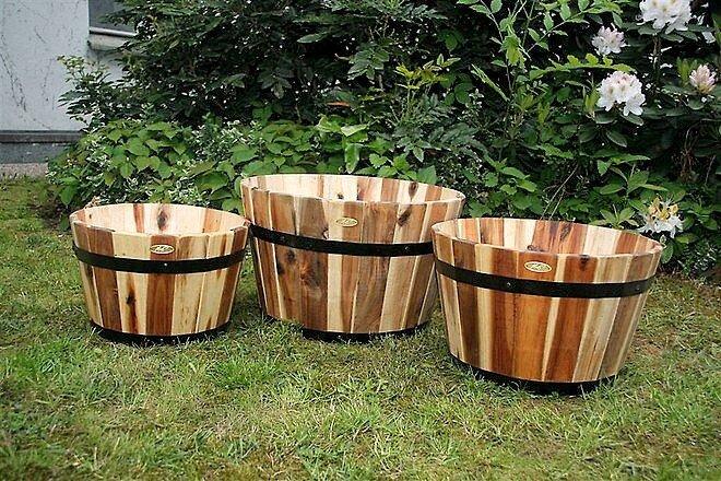 Zahradn kv tin e z ak tov ho d eva v prodej for Bambu in vaso prezzo