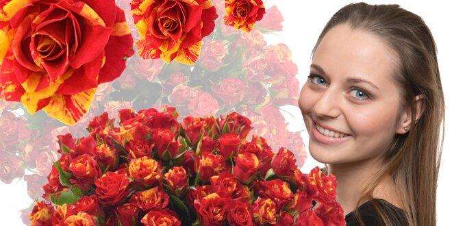 Prémiové trsové růže Fire Flash s 5 a více květy