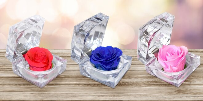Nesmrtelný květ růže v dárkové akrylové krabičce