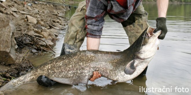 Pojďme na ryby - rybolov sumců v Orlové