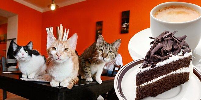Káva či domácí limo a dezert v kočičí kavárně