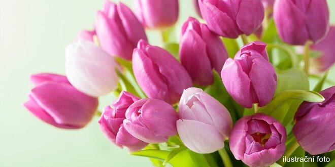 Čerstvé tulipány, ze kterých poskládáte i pugét