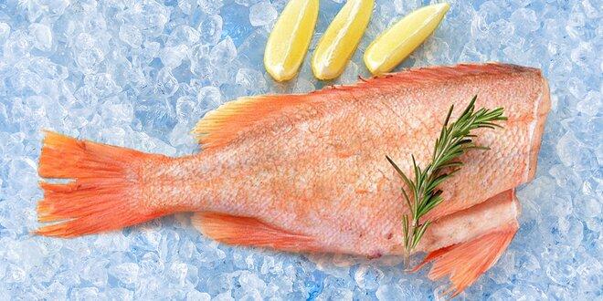 Mořský okouník: 2 kg na moři zmrazených ryb