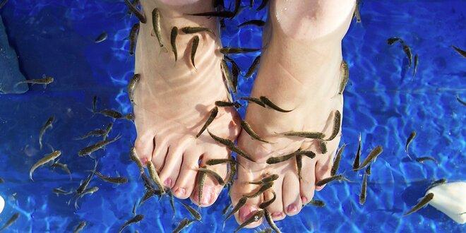 Koupel nohou s rybkami Garra Rufa