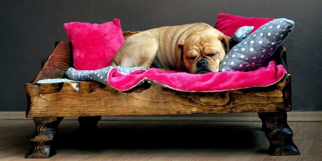 Dřevěné psí postýlky, polštářky i deka