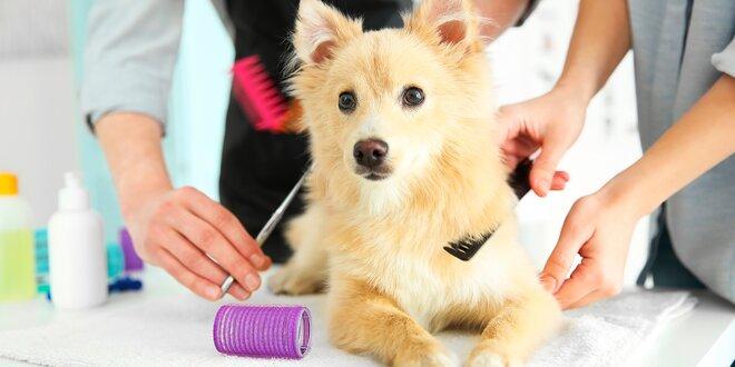 Srst jako lusk: 60 min. péče o psy až do 80 kg