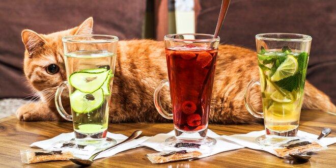 Horký nápoj a dezert dle výběru v kočičí kavárně