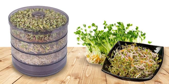 Třípatrová biomiska na klíčení a výběr z 11 semínek