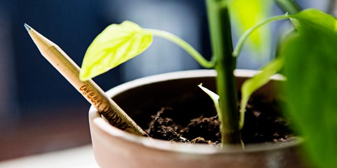 Rostoucí tužky SPROUT se čtrnácti typy bylinek