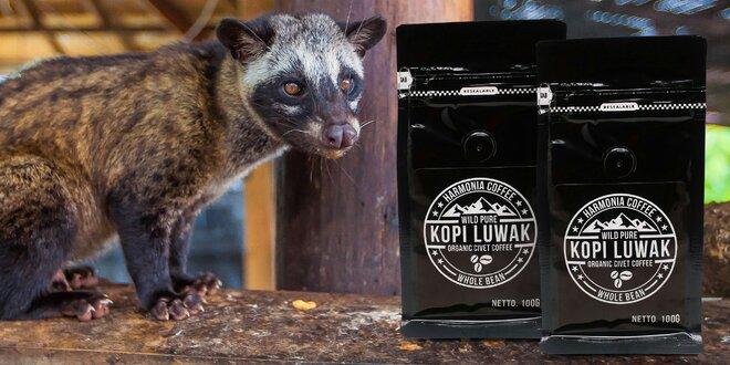 Cibetková káva Kopi Luwak z divoké přírody