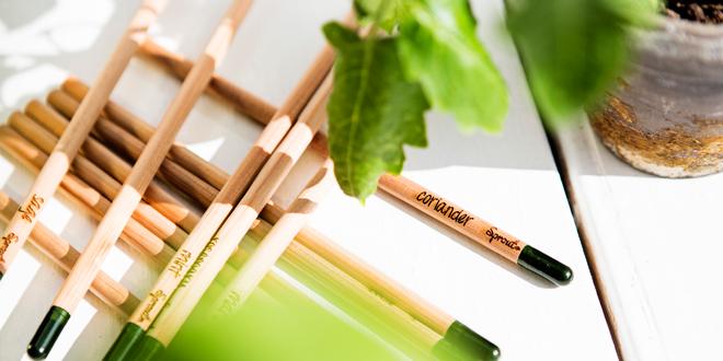 Až dopíšu, tak vyrostu: Rostoucí tužky a pastelky SPROUT