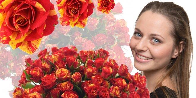 Prémiové trsové růže Fire Flash s více jak 5 květy