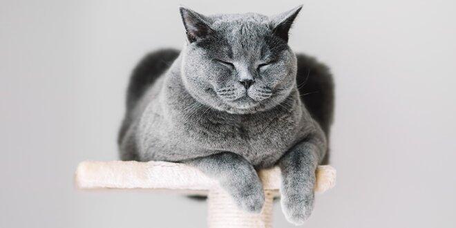 Škrabadla pro kočky v mnoha provedeních