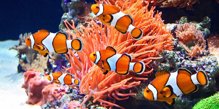 Obdivujte rybky z Mořského světa: vstupenky pro jednotlivce i celou rodinu