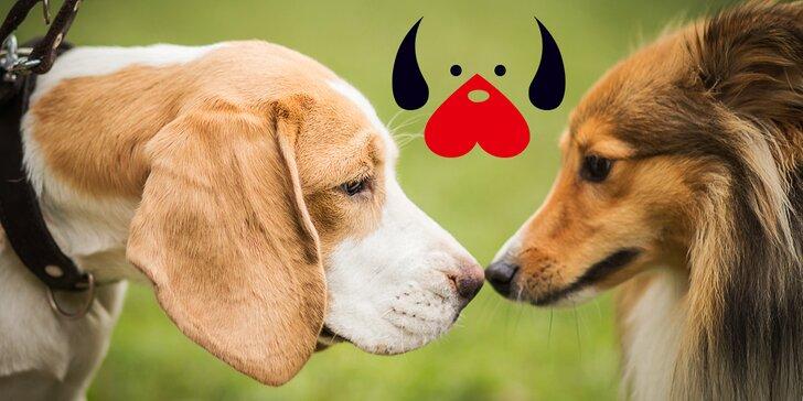 Blíží se Den zvířat: přispějte na krmení a léky pro zvířata z útulků a azylových farem