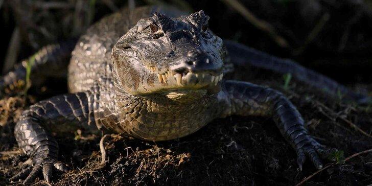 Nakrmte krokodýly: VIP vstupenka pro jednu osobu do Krokodýlí Zoo