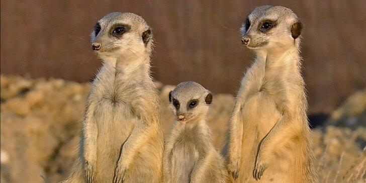 Pobyt v blízkosti zvířat: nocleh v táborské zoo a možnost být ošetřovatelem