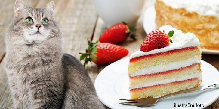 Toast a limonáda nebo káva a zákusek v kavárně plné koček - i pro 2