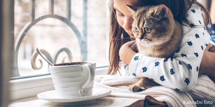 Čaj ze šťávy z čerstvého ovoce a lahodný koláč v kočičí kavárně pro 1 nebo 2 osoby