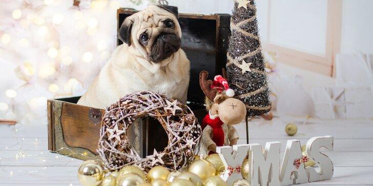 Vánoční focení dětí nebo pejsků v ateliéru: 5 - 10 upravených fotek