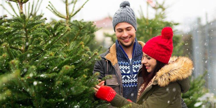 Čerstvé vánoční normandské jedle z plantáže ve 3 jakostech