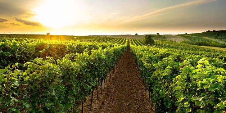 Pobyt plný vína a cyklistiky přímo ve sklípku ve vinařské obci na jižní Moravě