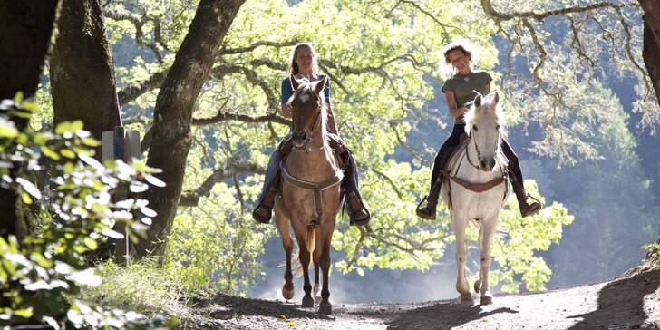 Péče o koně a projížďka v přírodě včetně přirozené komunikace s koňmi
