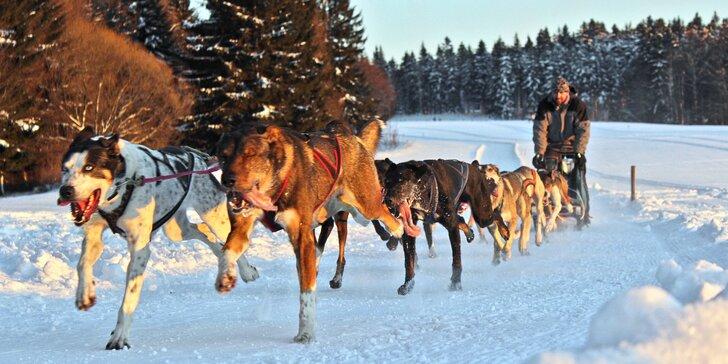 Nezapomenutelný zážitek: 60 nebo 90minutová projížďka se psím spřežením na saních či káře